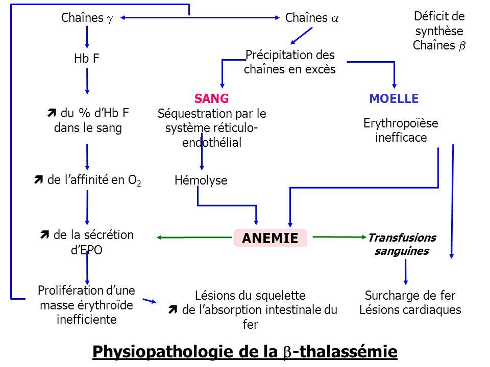 Transfusions sanguines Physiopathologie de la b-thalassémie