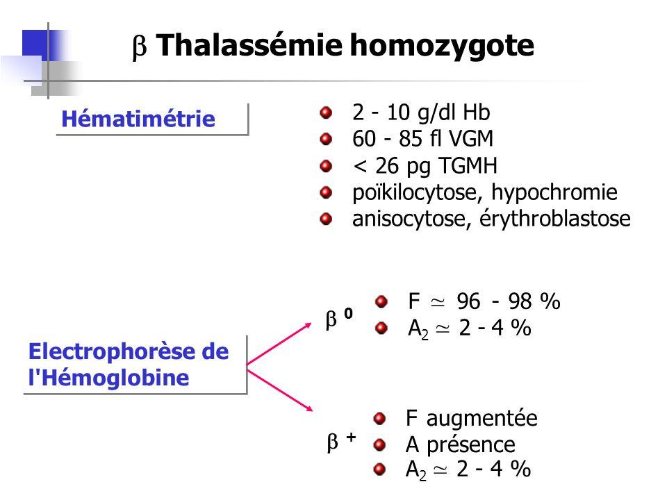 b Thalassémie homozygote