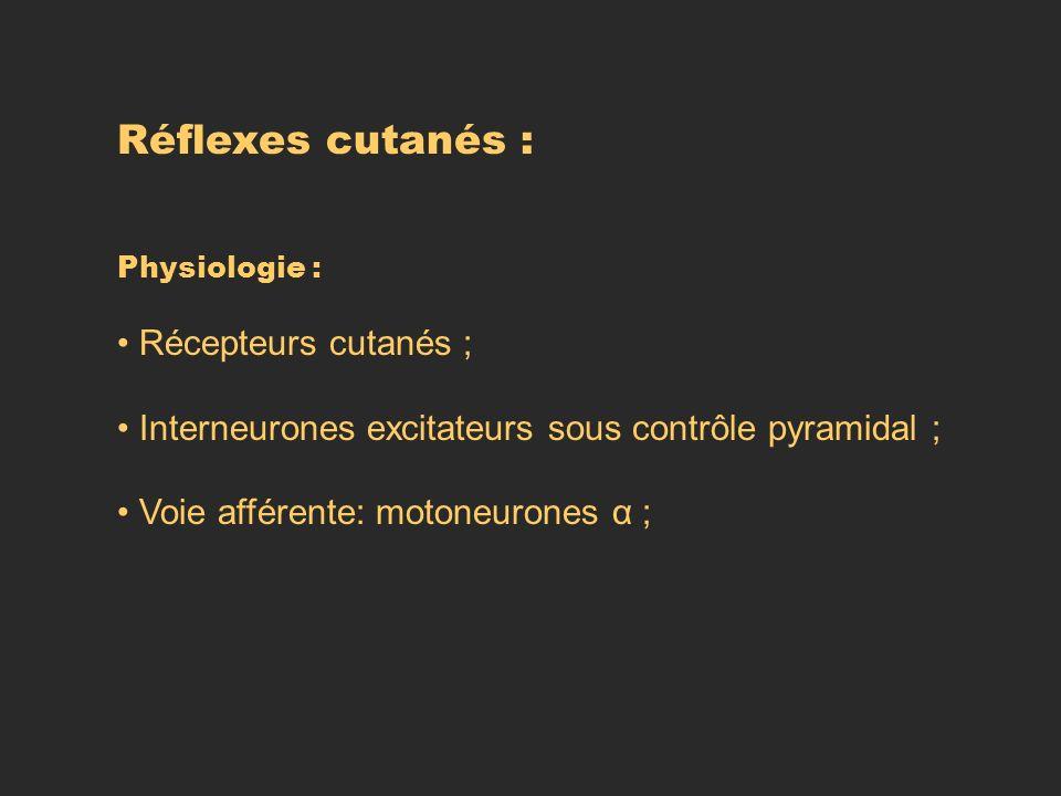 Réflexes cutanés : Récepteurs cutanés ;