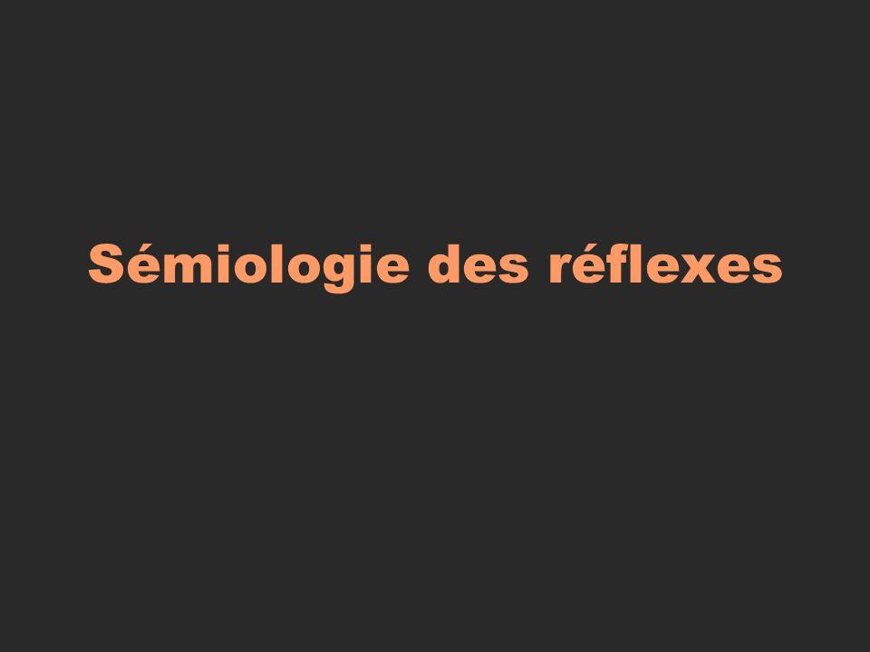 Sémiologie des réflexes