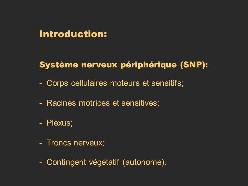 Introduction: Système nerveux périphérique (SNP):