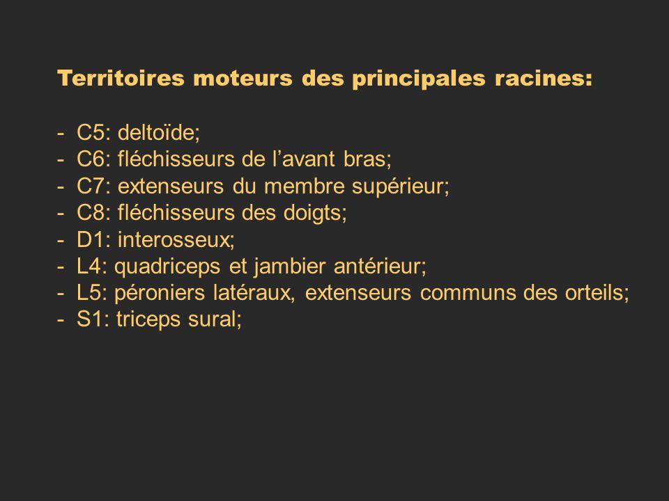 Territoires moteurs des principales racines: