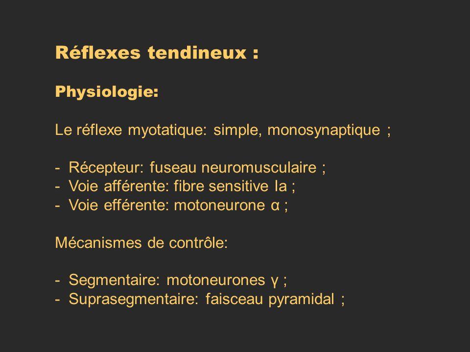 Réflexes tendineux : Physiologie:
