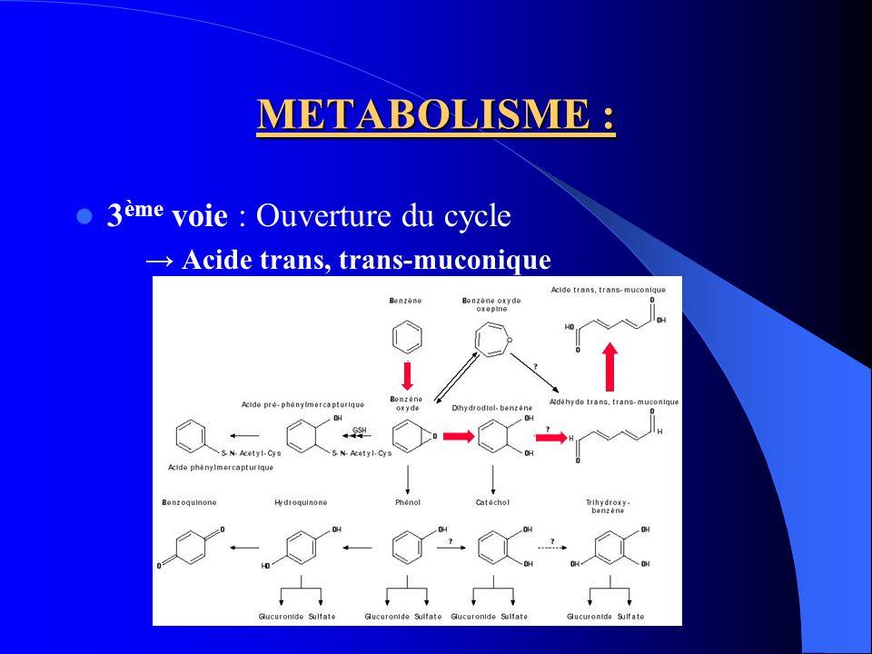 METABOLISME : 3ème voie : Ouverture du cycle