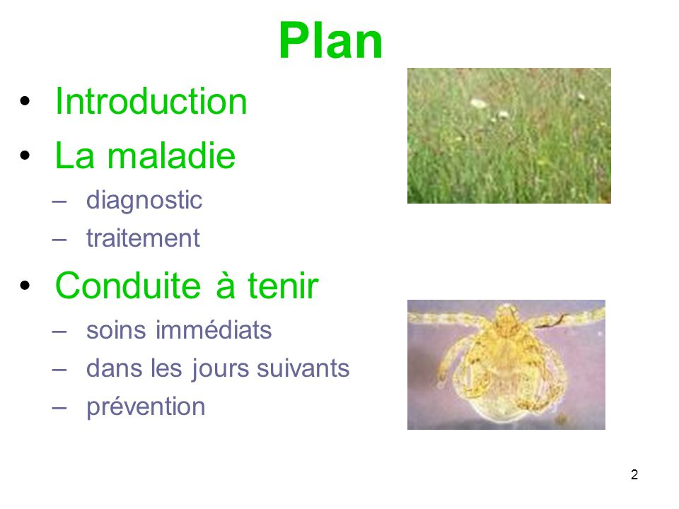 Plan Introduction La maladie Conduite à tenir diagnostic traitement