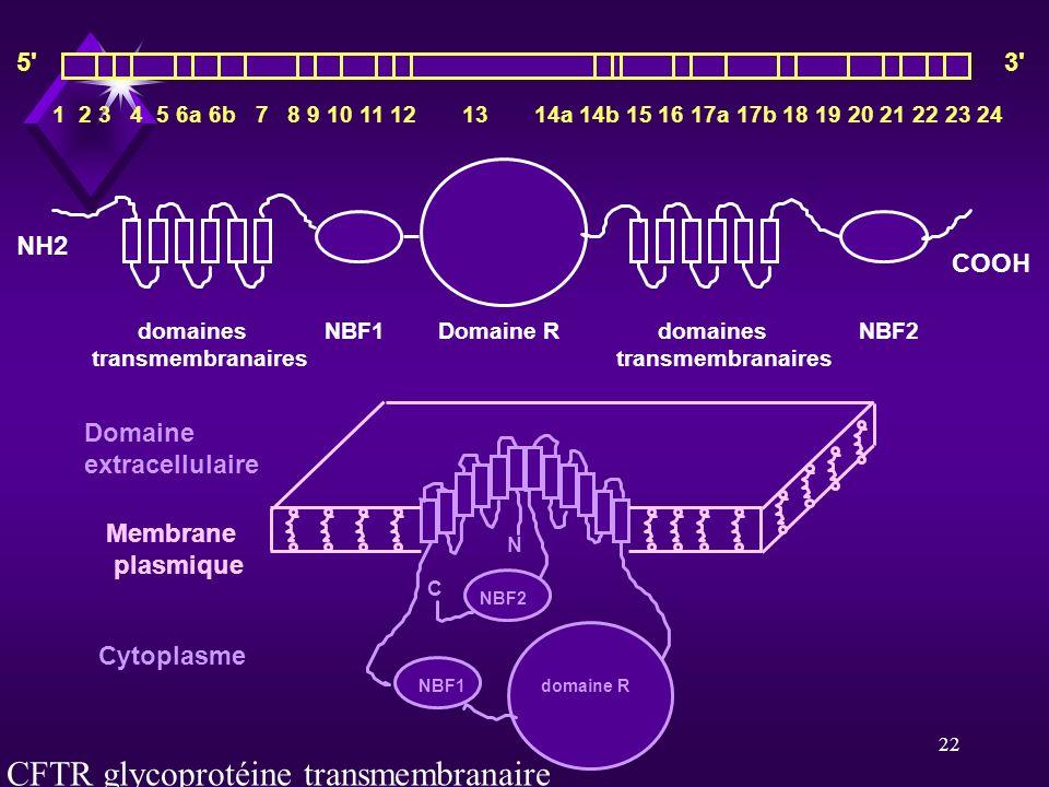CFTR glycoprotéine transmembranaire