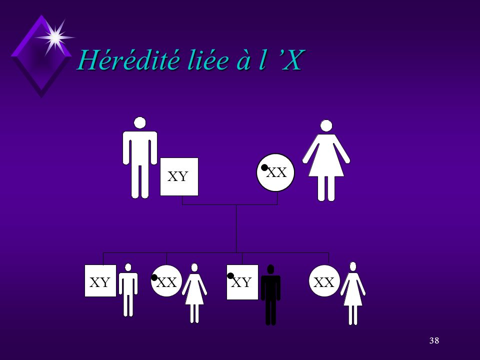 Hérédité liée à l 'X XY XX