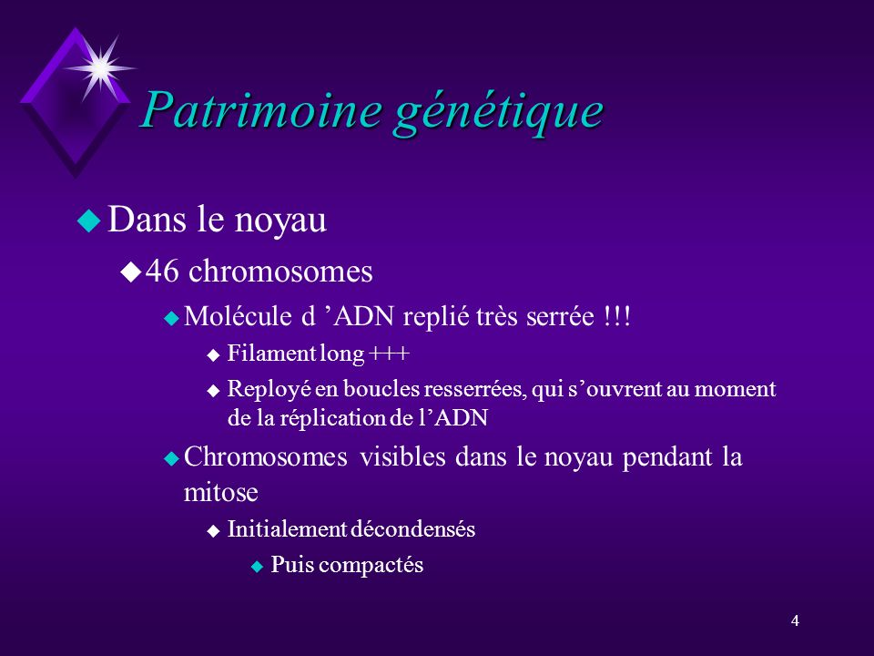 Patrimoine génétique Dans le noyau 46 chromosomes