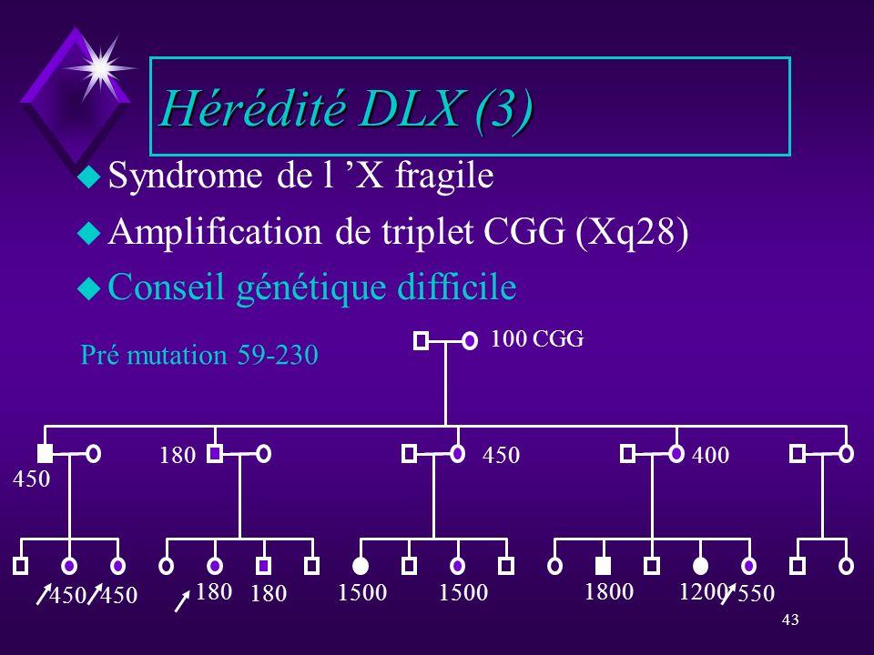 Hérédité DLX (3) Syndrome de l 'X fragile