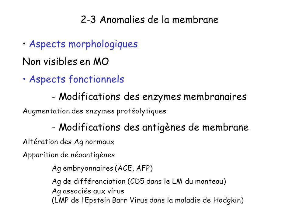 2-3 Anomalies de la membrane