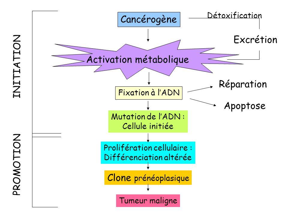 Activation métabolique INITIATION