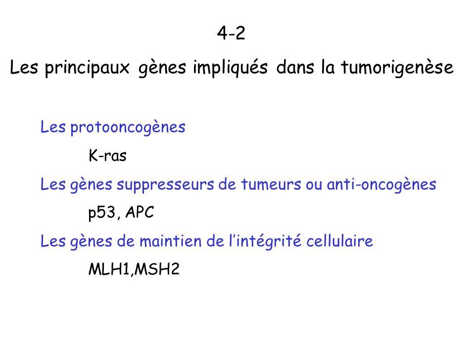 Les principaux gènes impliqués dans la tumorigenèse