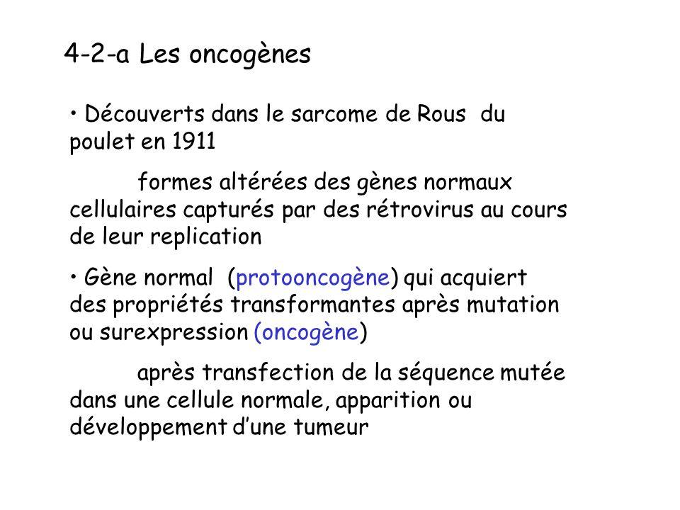 4-2-a Les oncogènes Découverts dans le sarcome de Rous du poulet en 1911.