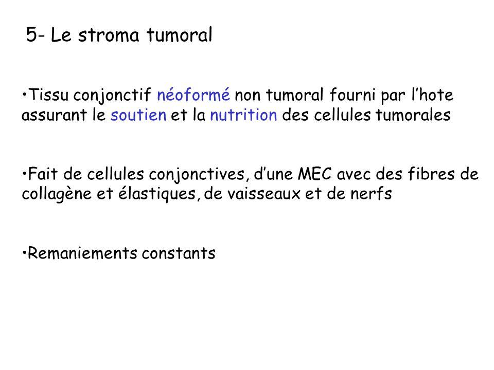 5- Le stroma tumoral Tissu conjonctif néoformé non tumoral fourni par l'hote assurant le soutien et la nutrition des cellules tumorales.