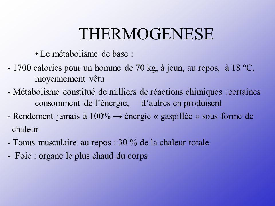 THERMOGENESE • Le métabolisme de base :