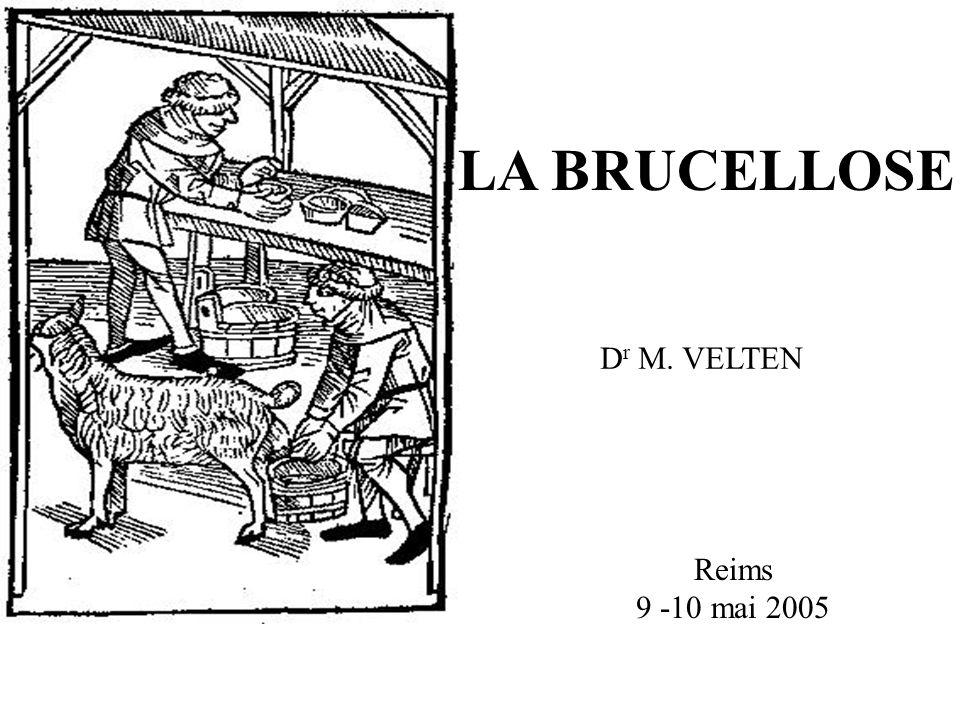LA BRUCELLOSE Dr M. VELTEN Reims 9 -10 mai 2005