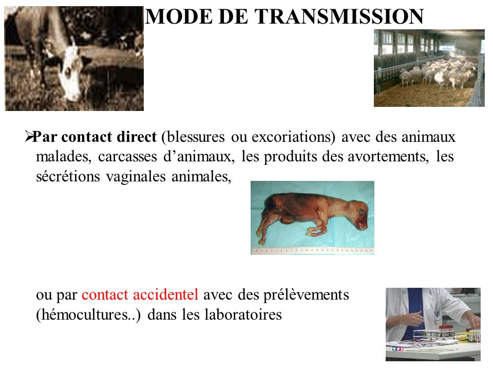 MODE DE TRANSMISSION Par contact direct (blessures ou excoriations) avec des animaux.