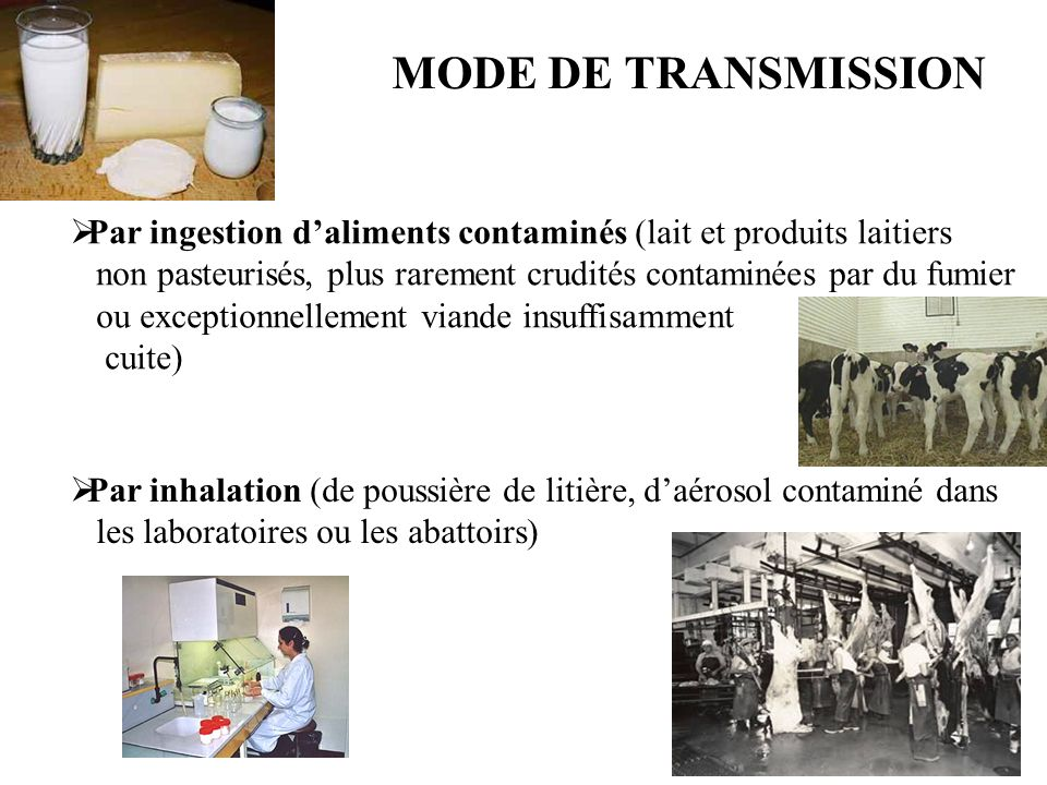 MODE DE TRANSMISSION Par ingestion d'aliments contaminés (lait et produits laitiers.