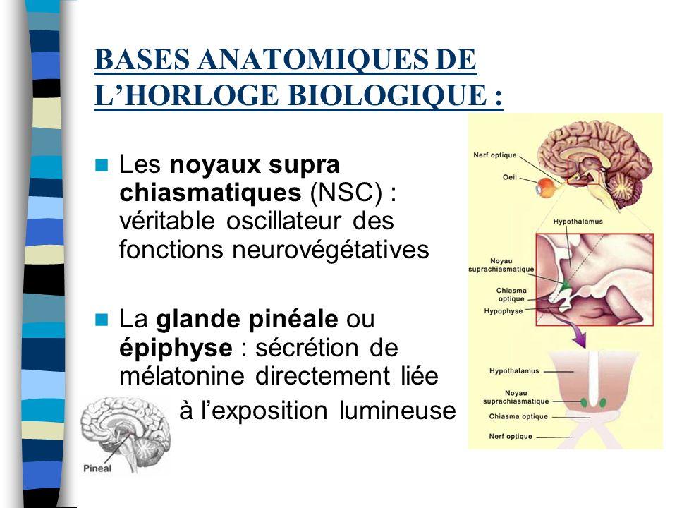 BASES ANATOMIQUES DE L'HORLOGE BIOLOGIQUE :
