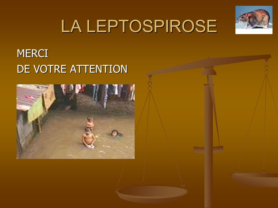 LA LEPTOSPIROSE MERCI DE VOTRE ATTENTION