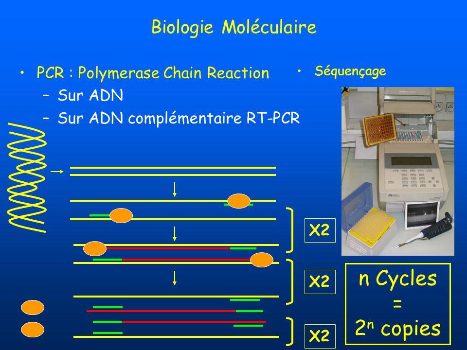 n Cycles = 2n copies Biologie Moléculaire