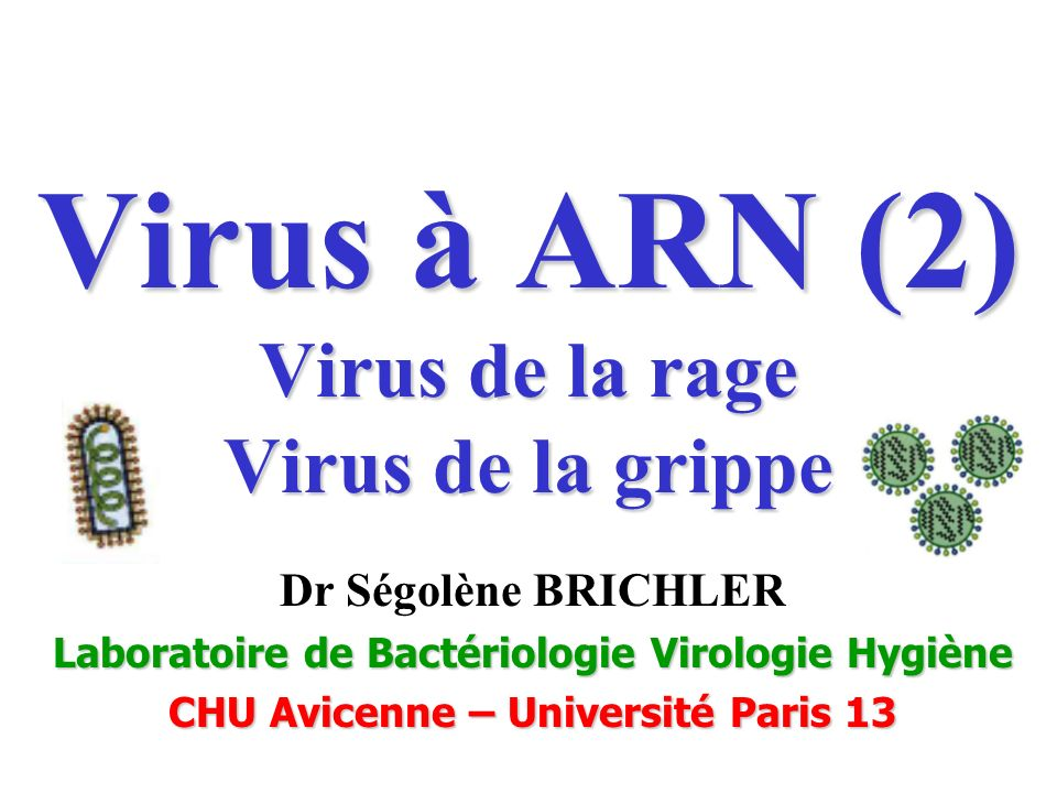 Virus à ARN (2) Virus de la rage Virus de la grippe