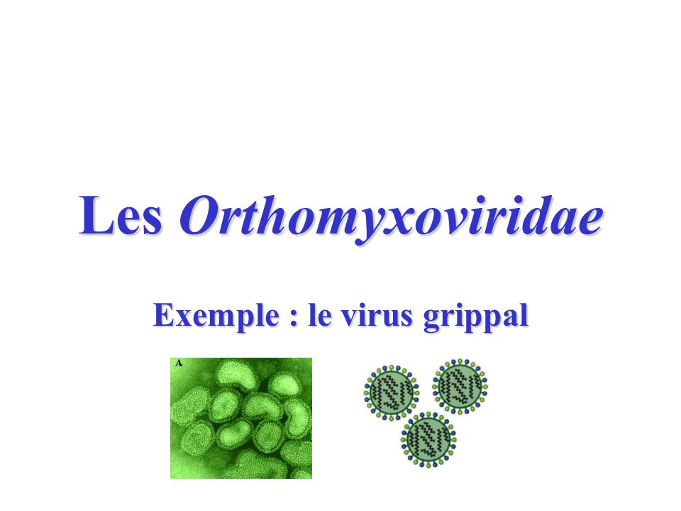 Exemple : le virus grippal