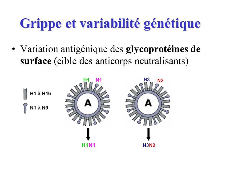 Grippe et variabilité génétique