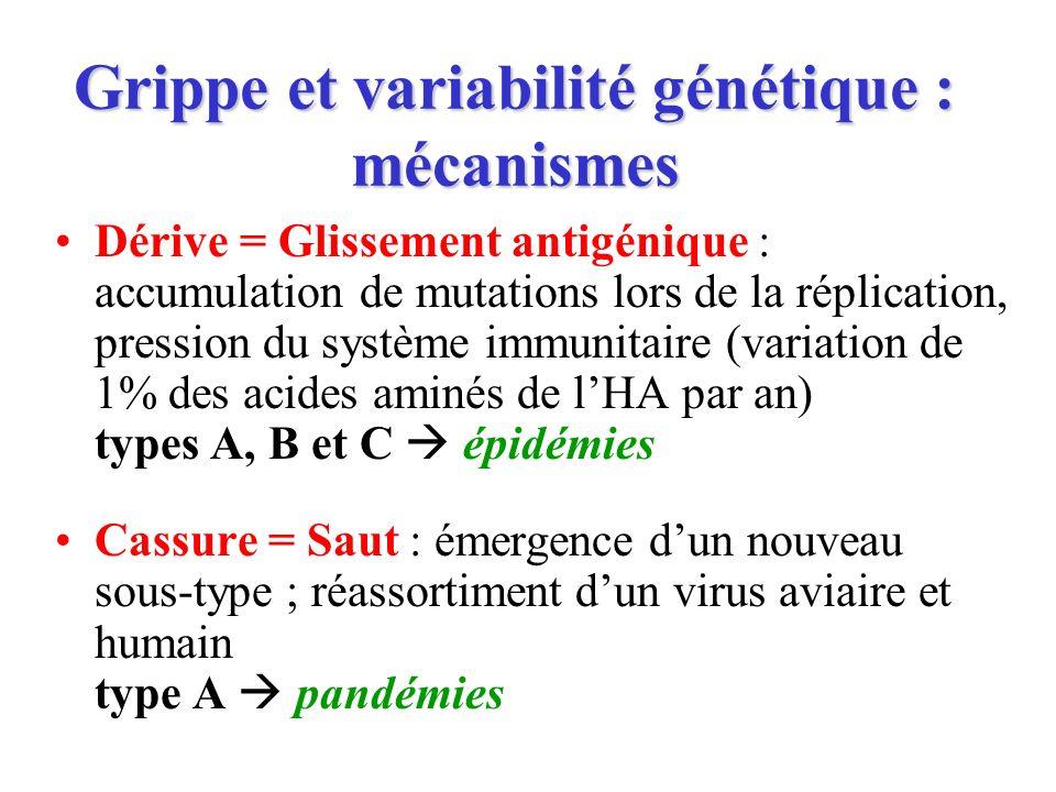 Grippe et variabilité génétique : mécanismes