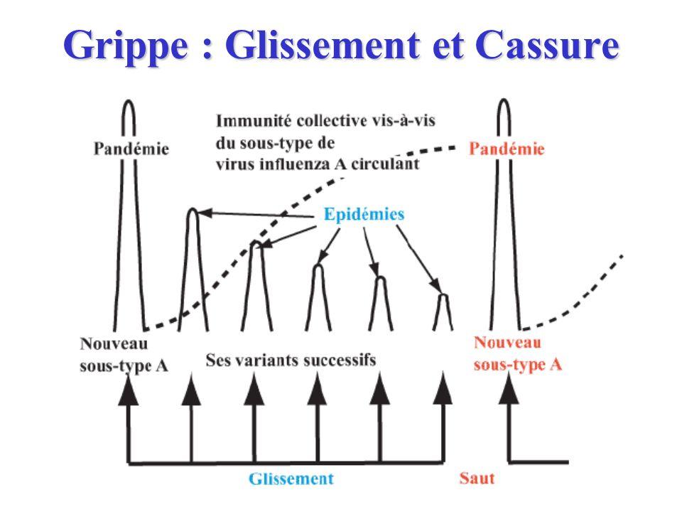 Grippe : Glissement et Cassure