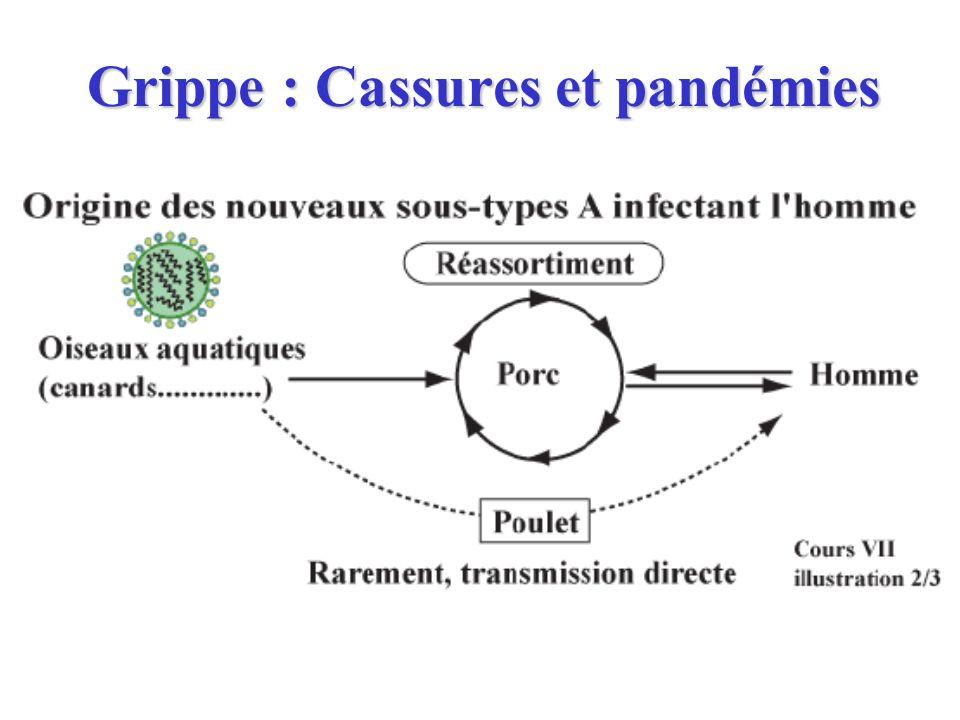 Grippe : Cassures et pandémies
