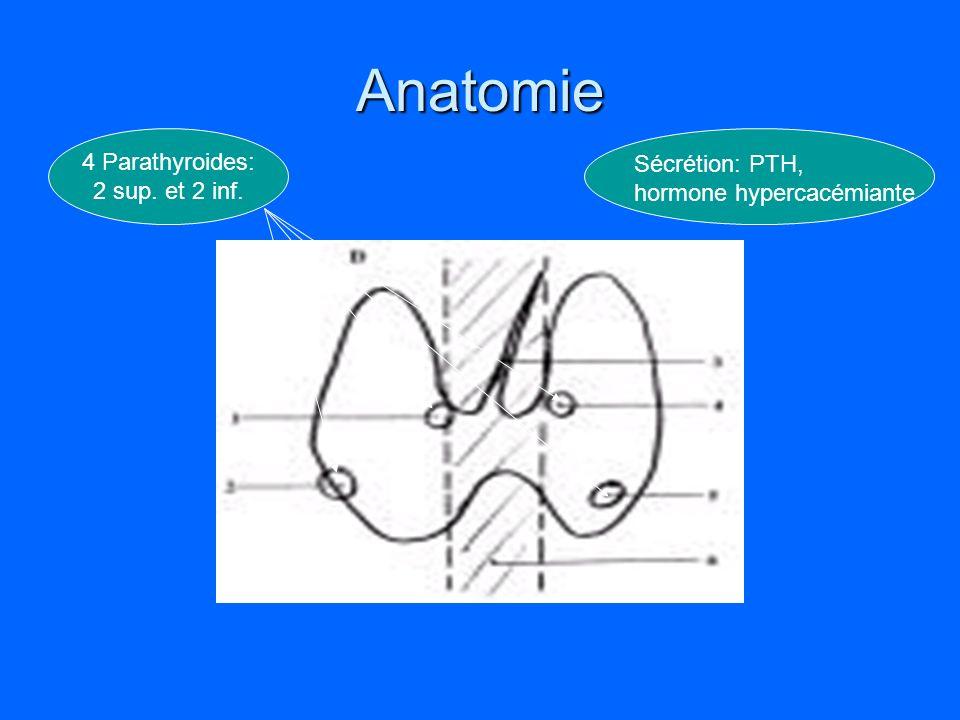 Anatomie 4 Parathyroides: Sécrétion: PTH, 2 sup. et 2 inf.