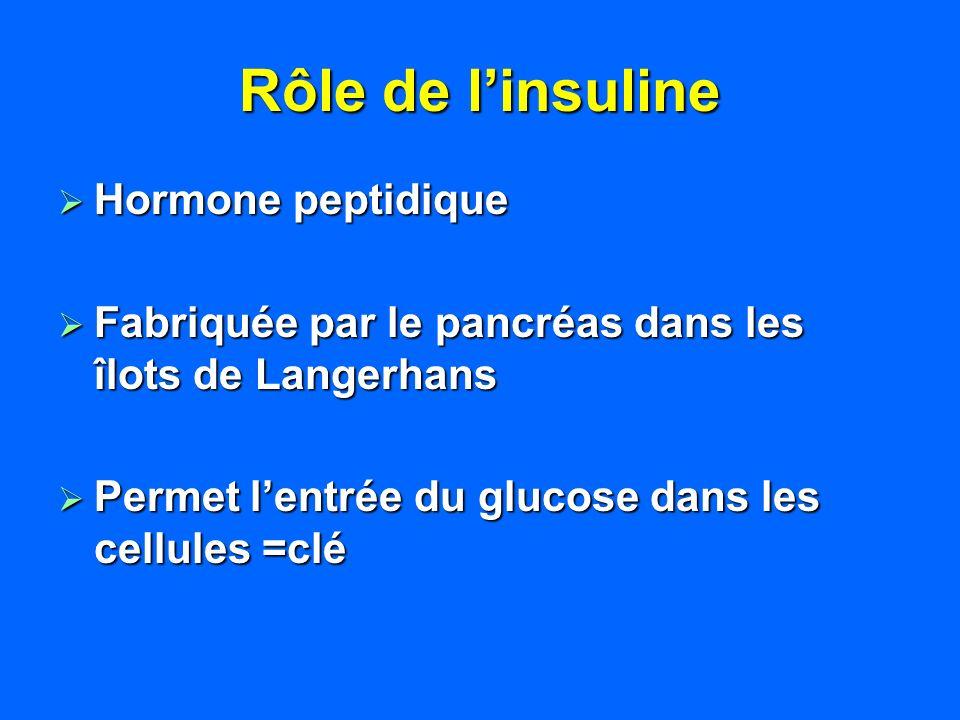 Rôle de l'insuline Hormone peptidique