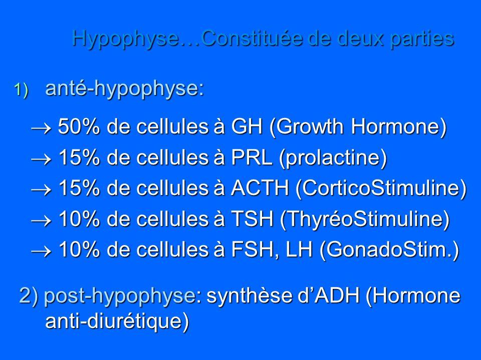 Hypophyse…Constituée de deux parties