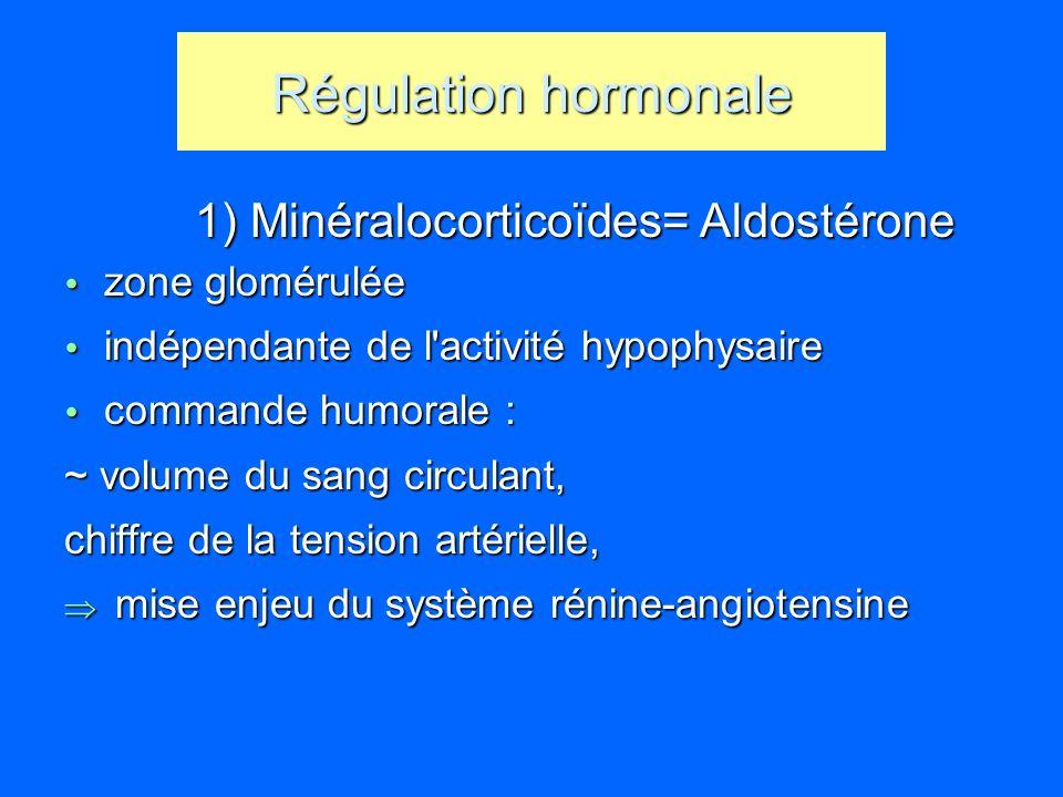 Régulation hormonale 1) Minéralocorticoïdes= Aldostérone