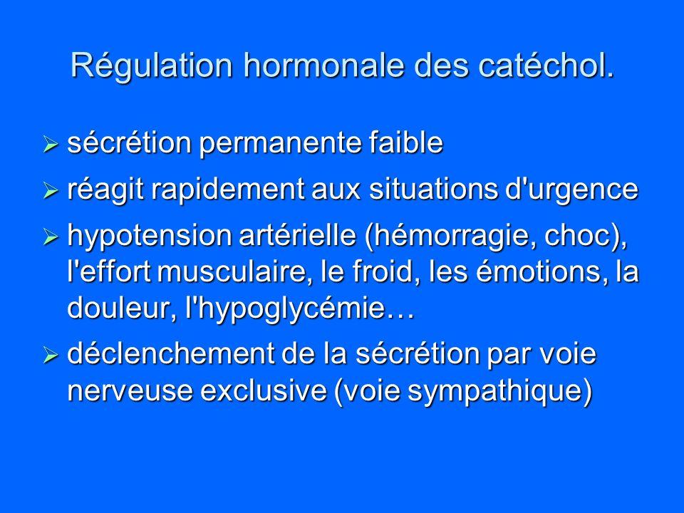 Régulation hormonale des catéchol.
