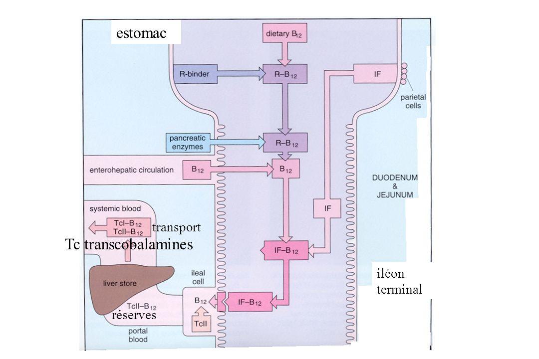 estomac transport Tc transcobalamines iléon terminal réserves