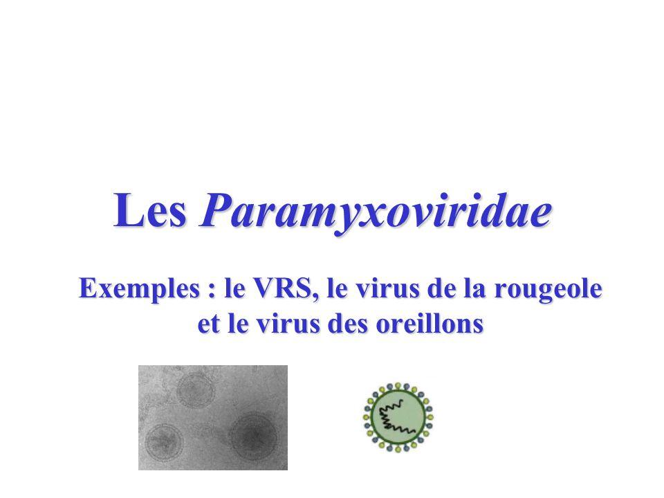 Exemples : le VRS, le virus de la rougeole et le virus des oreillons