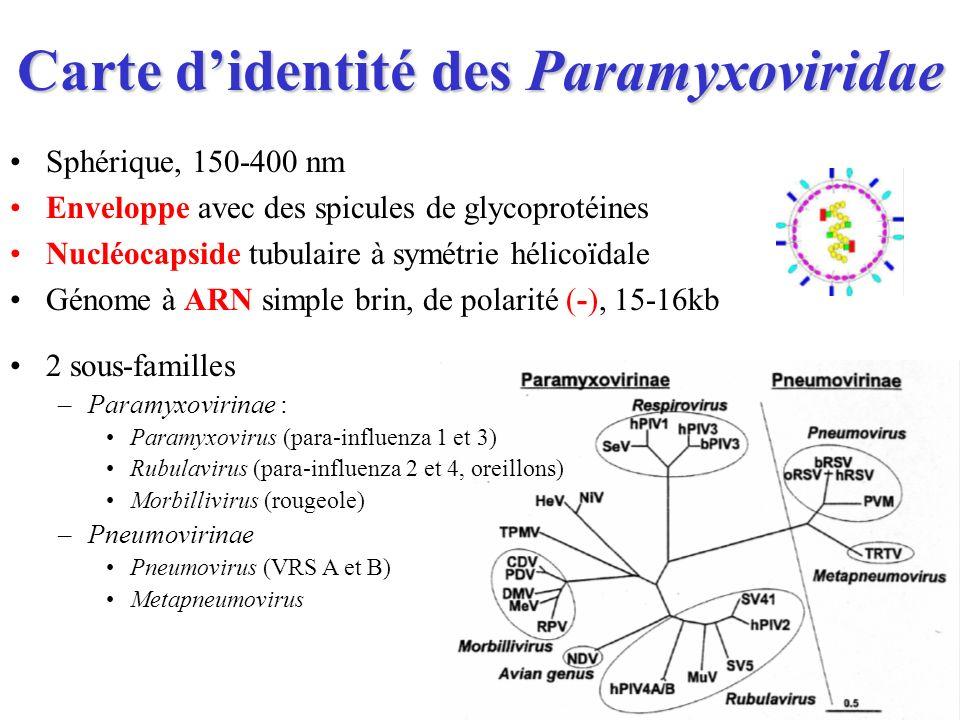 Carte d'identité des Paramyxoviridae