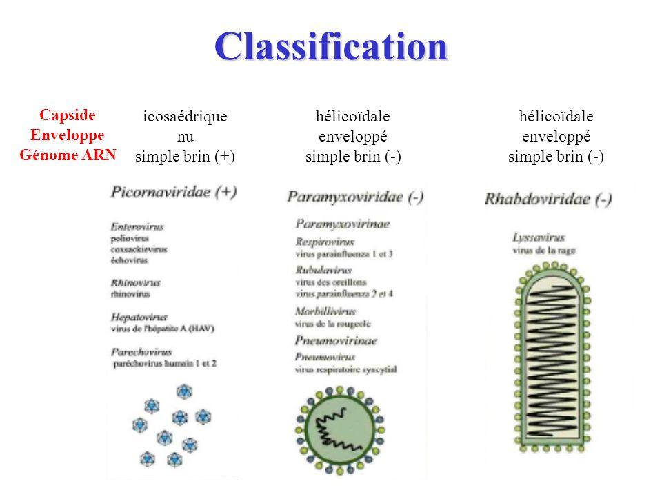 Classification Capside Enveloppe Génome ARN icosaédrique nu