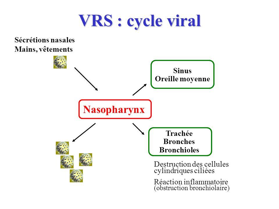 VRS : cycle viral Nasopharynx Sécrétions nasales Mains, vêtements