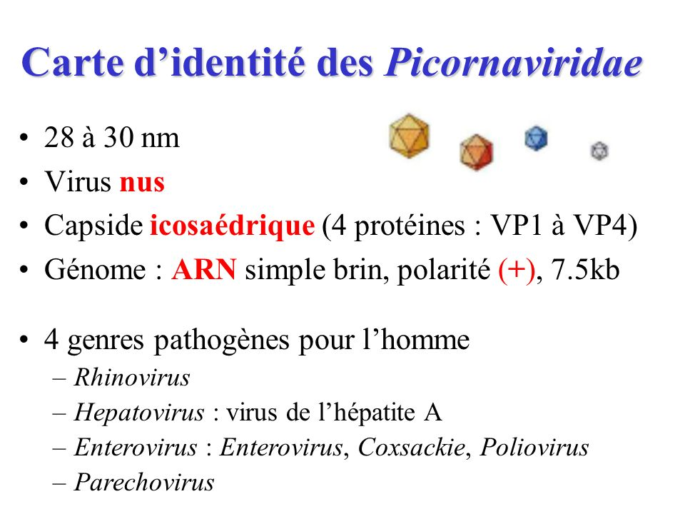 Carte d'identité des Picornaviridae