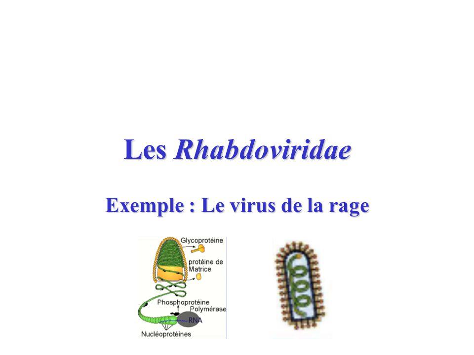 Exemple : Le virus de la rage