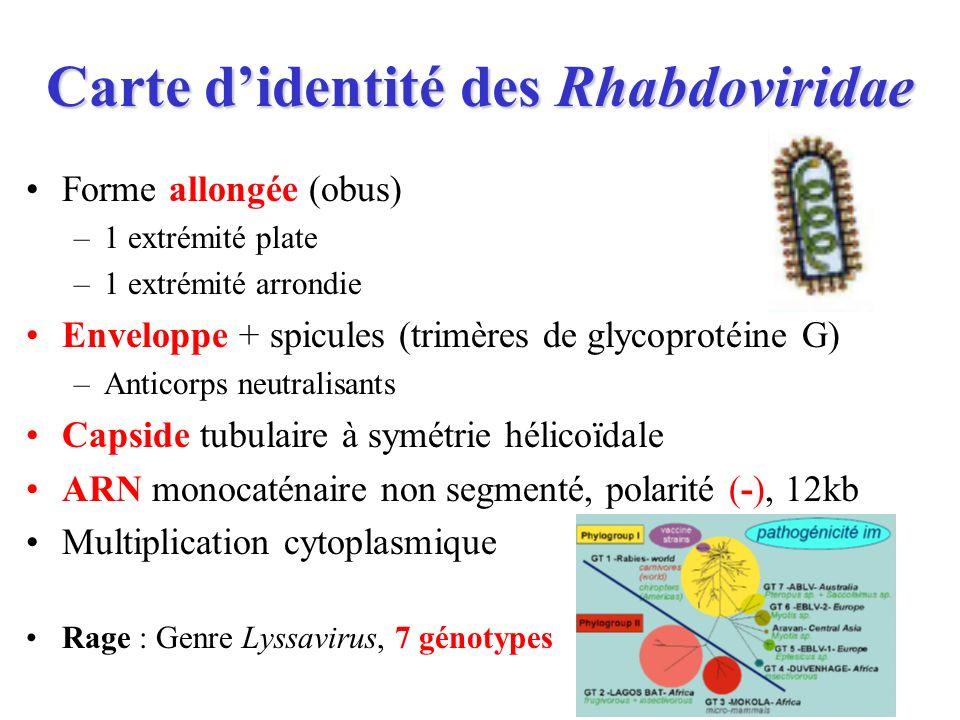 Carte d'identité des Rhabdoviridae