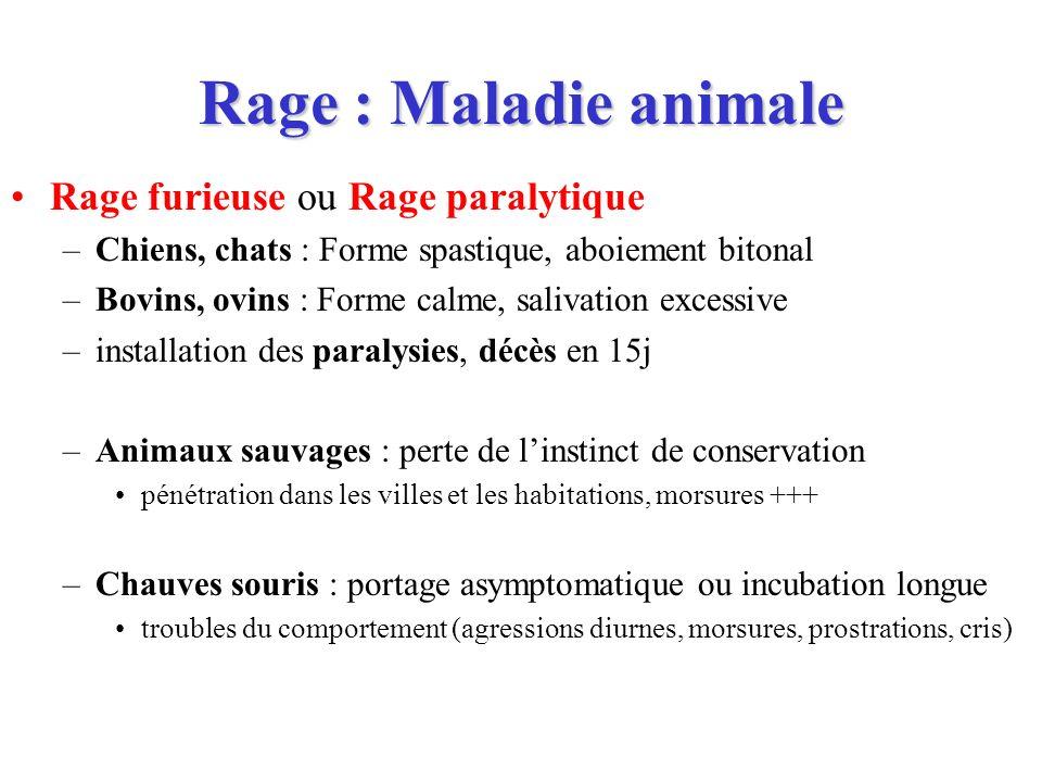 Rage : Maladie animale Rage furieuse ou Rage paralytique