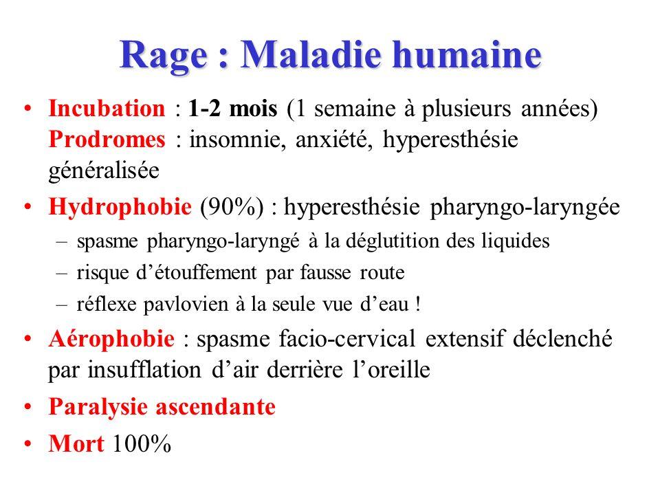 Rage : Maladie humaine Incubation : 1-2 mois (1 semaine à plusieurs années) Prodromes : insomnie, anxiété, hyperesthésie généralisée.