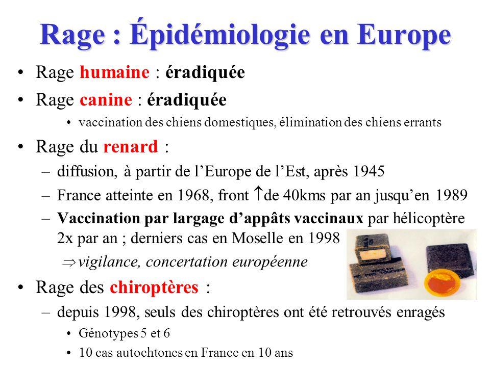 Rage : Épidémiologie en Europe