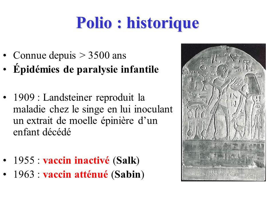 Polio : historique Connue depuis > 3500 ans