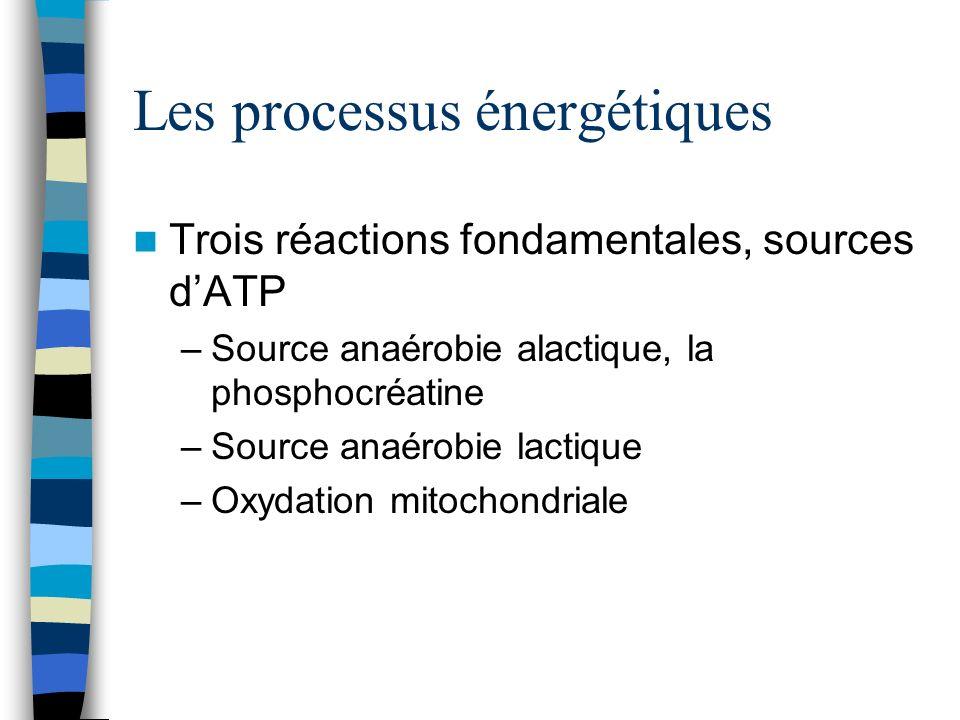 Les processus énergétiques