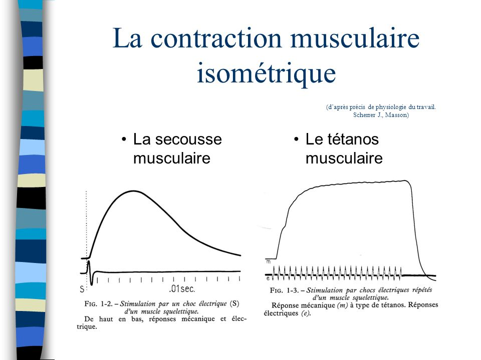 La contraction musculaire isométrique